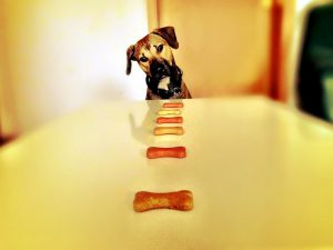 how to make healthy dog treats