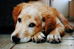 illnesses you can catch from your dog