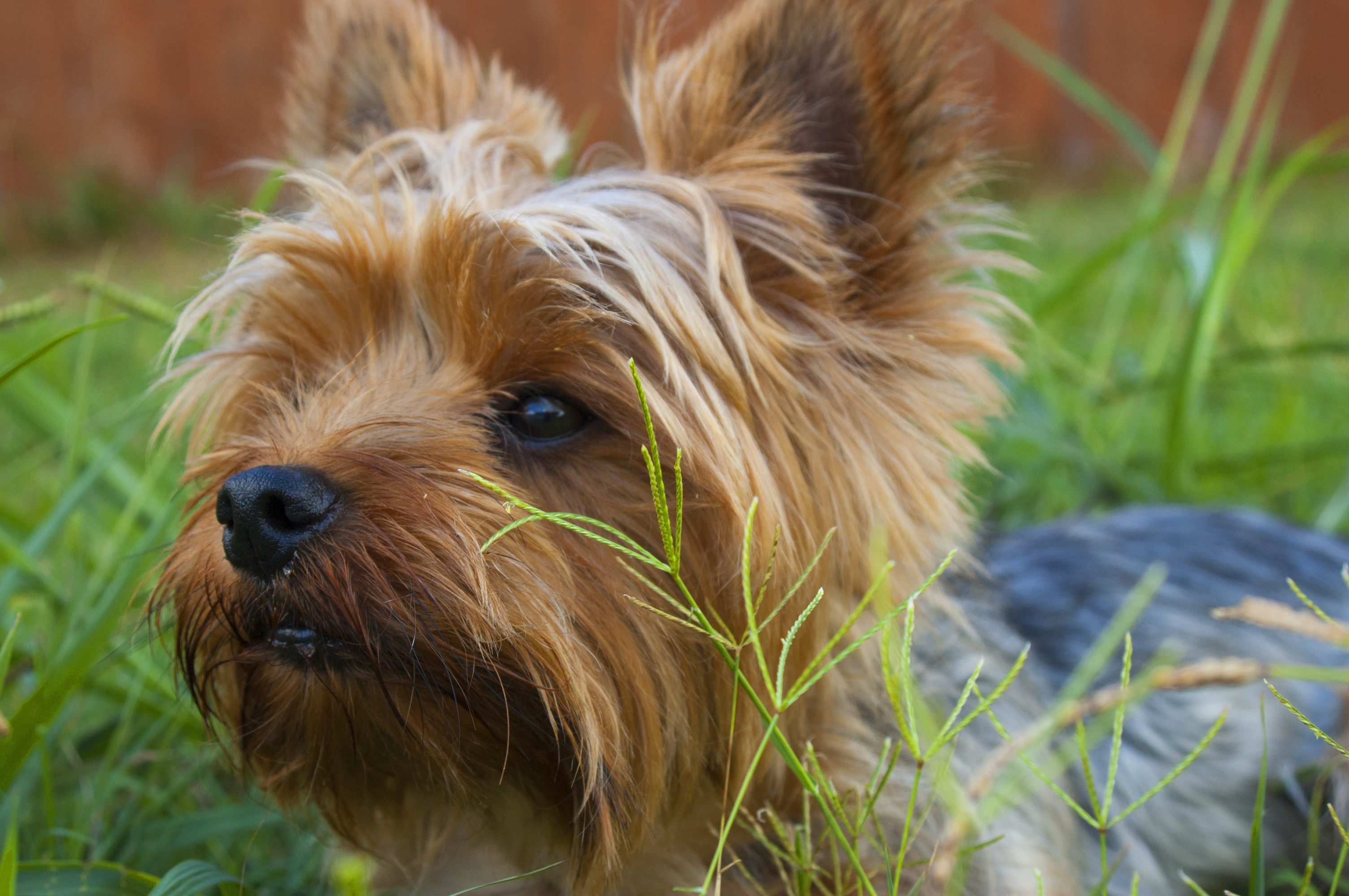 List of poisonous plants for dogs