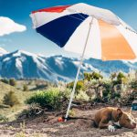Tips for traveling with a dog