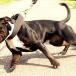 Train your dog not to pull on leash