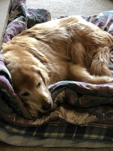 Best dog beds for senior dogs