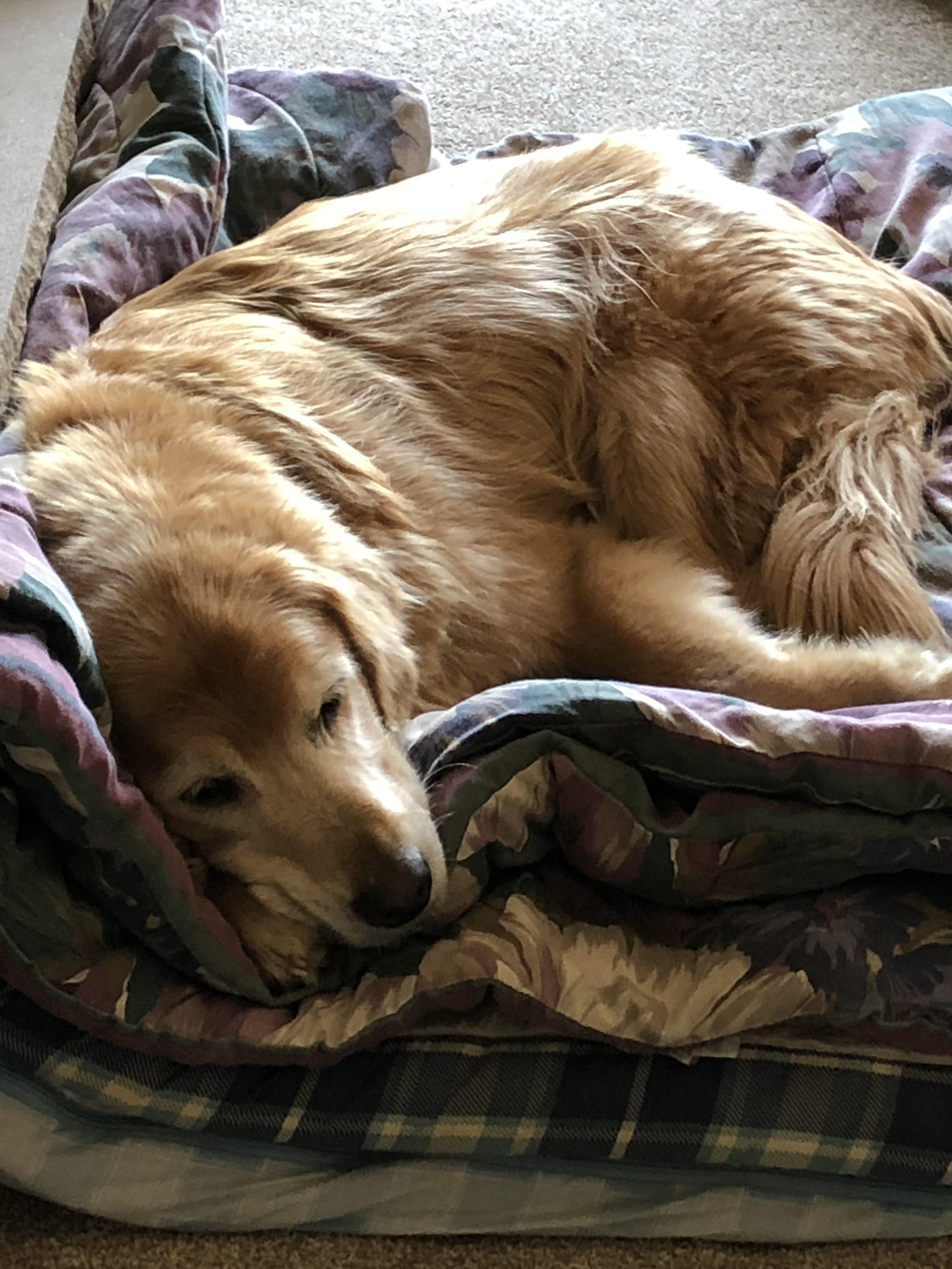 Best dog beds for seniors