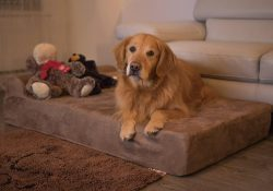 Big Barker Dog Bed Review