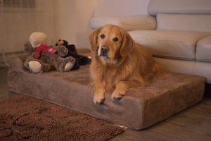 Big Barker Dog Bed Review