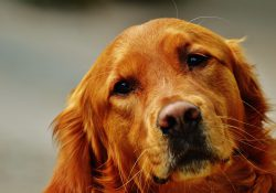 greiving the loss of a dog