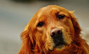 Grieving the loss of a dog