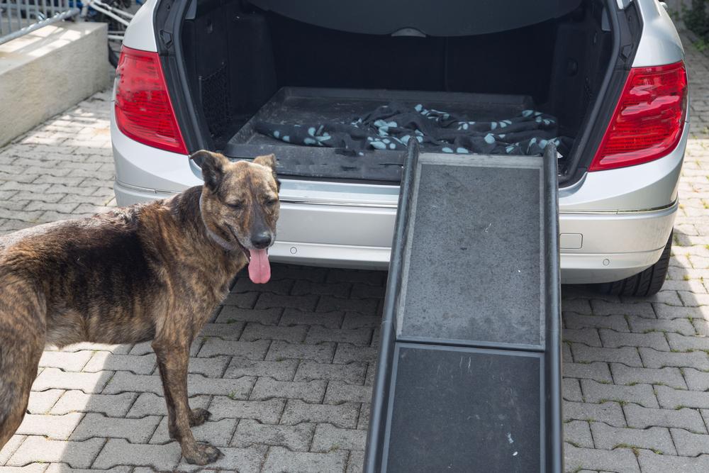 Dog by Ramp