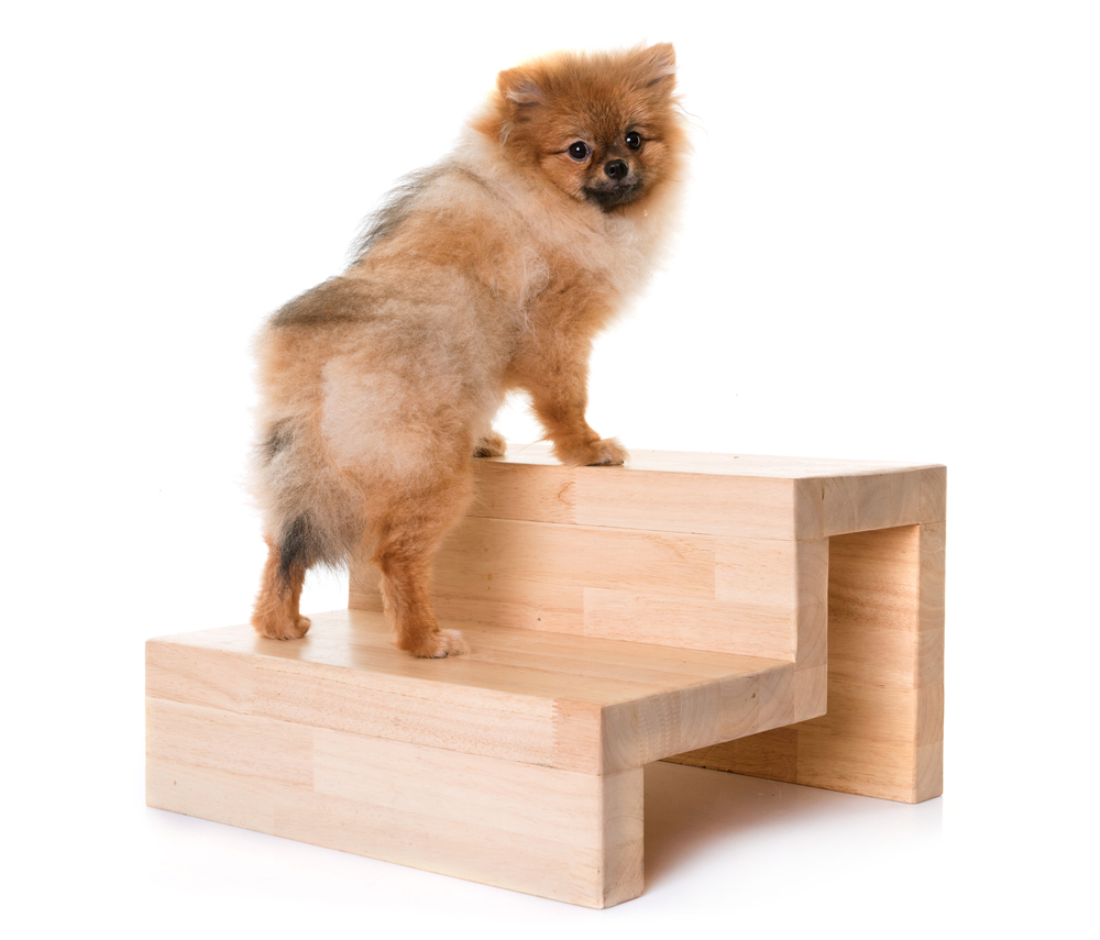 Dog stairs vs ramps