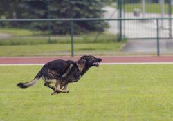 Best Dog Fence
