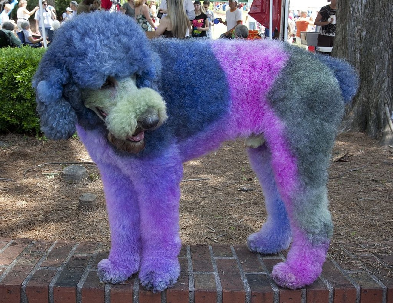 Hallween for dogs - no dye