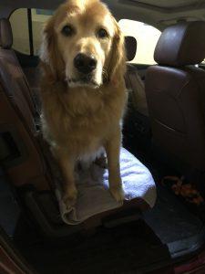 Dog sitting on towel