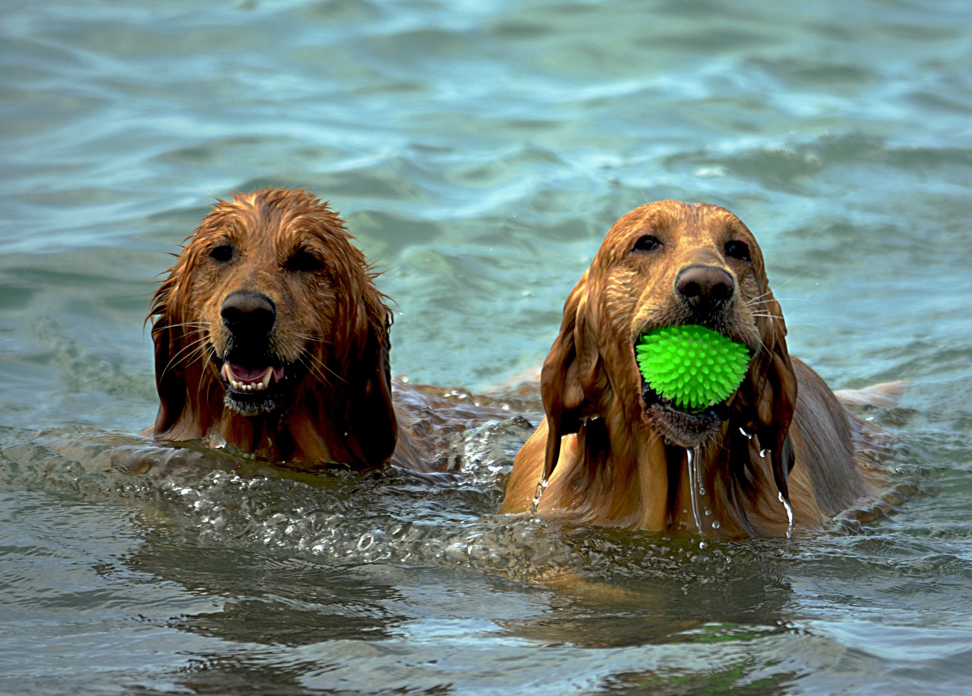Wet dirty dogs