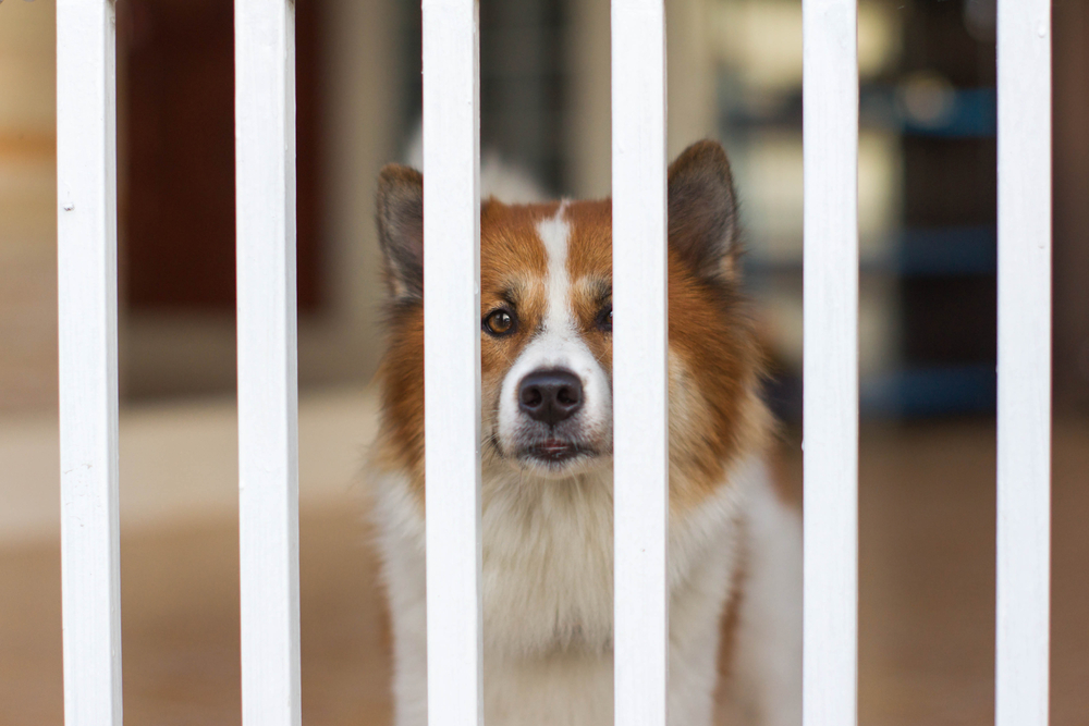 Best indoor dog gates