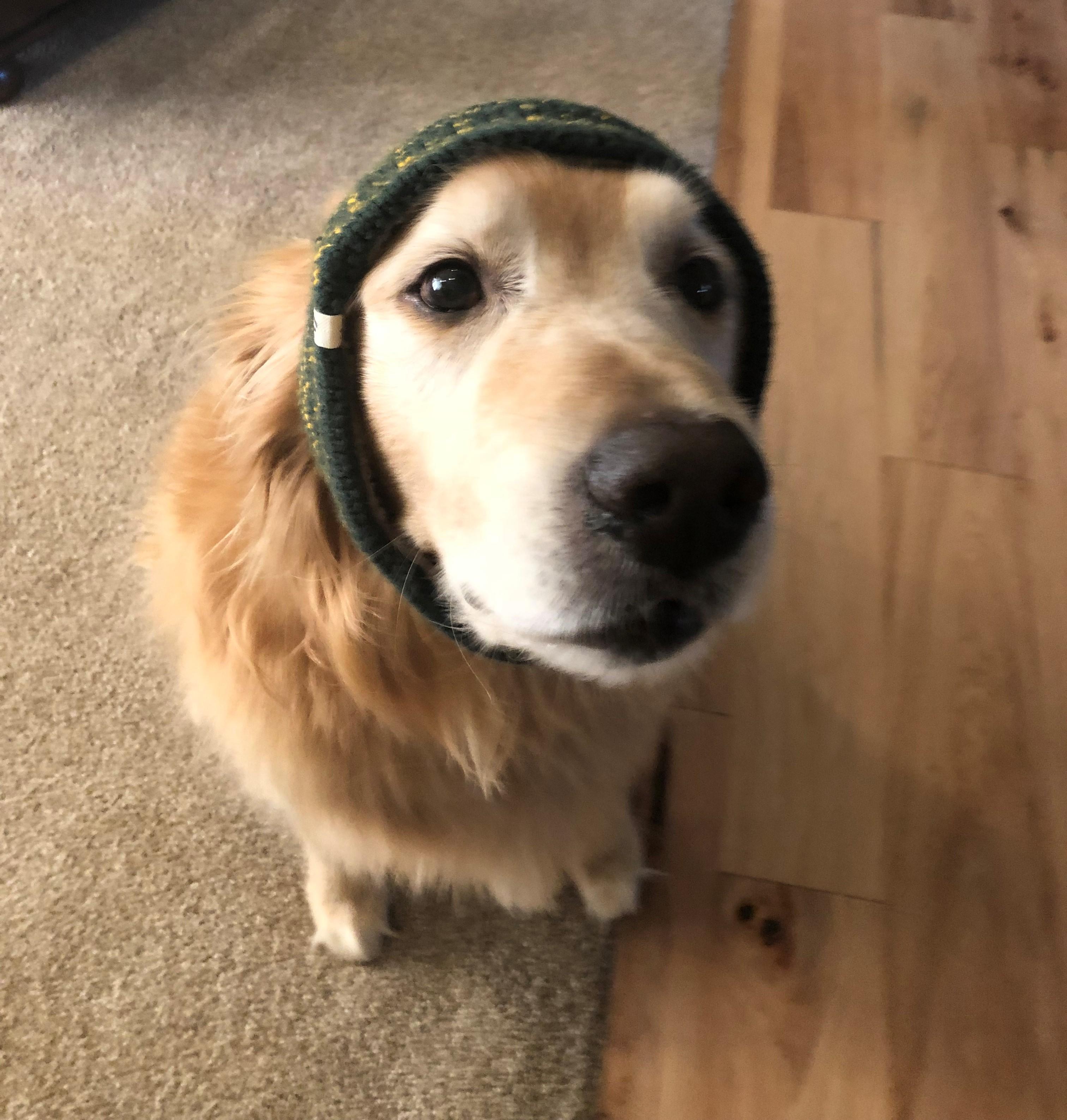 Keeping your dog's ears warm