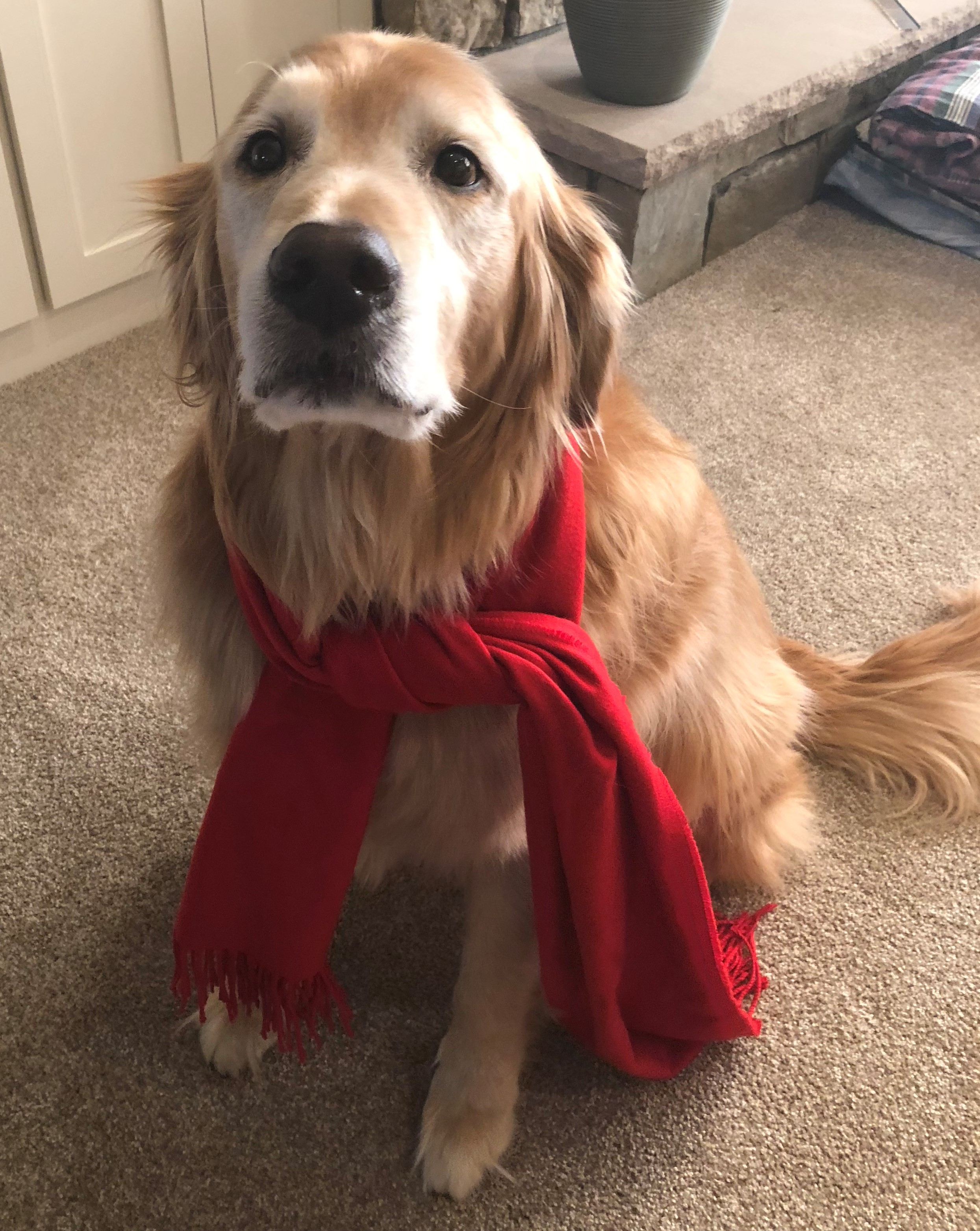 Dog scarf for winter