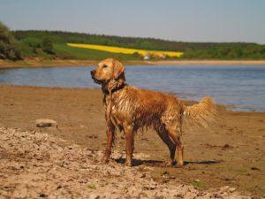 Bissell Bark Bath
