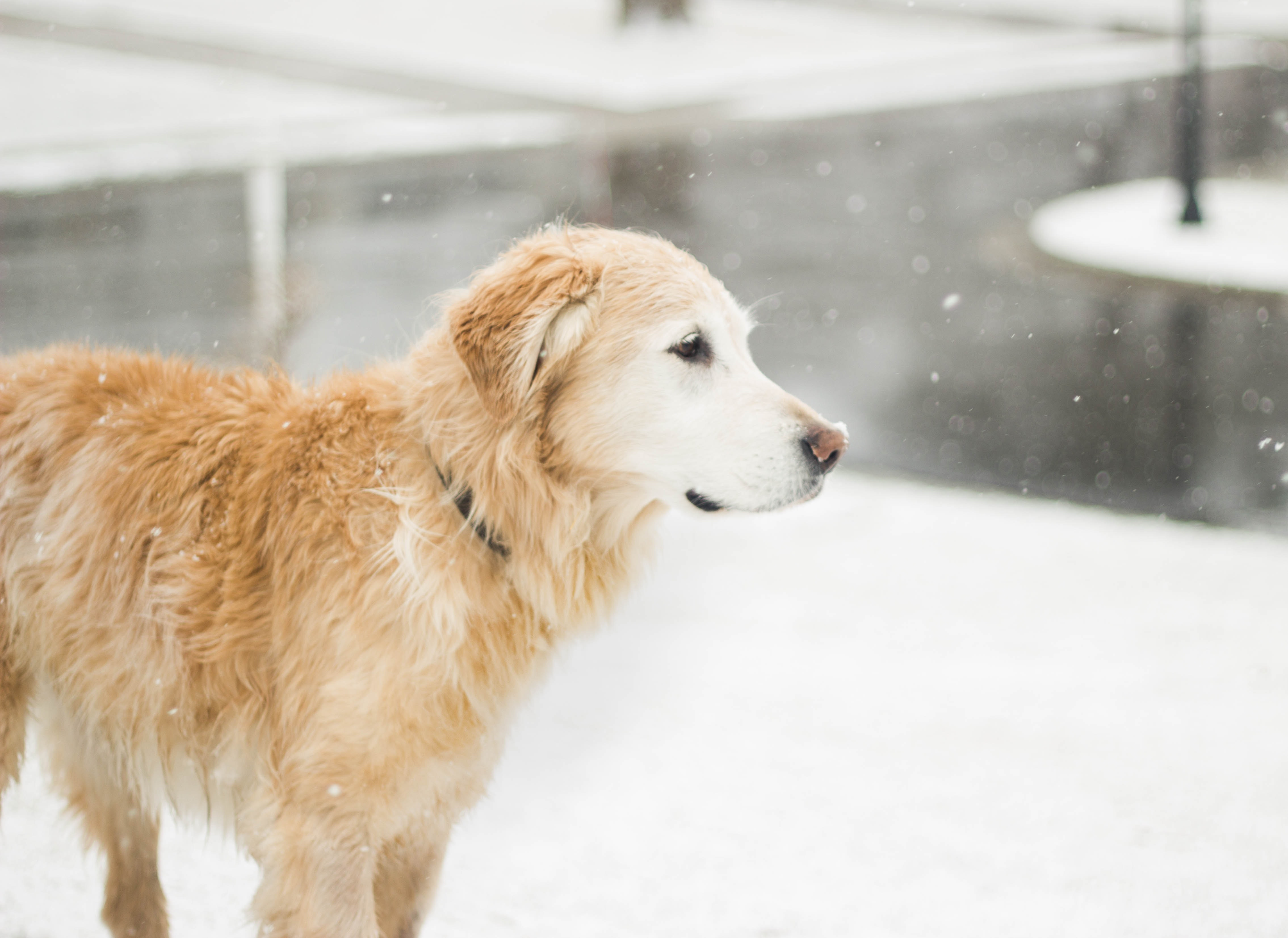Dogs in the cold weather