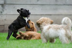Prevention of kennel cough