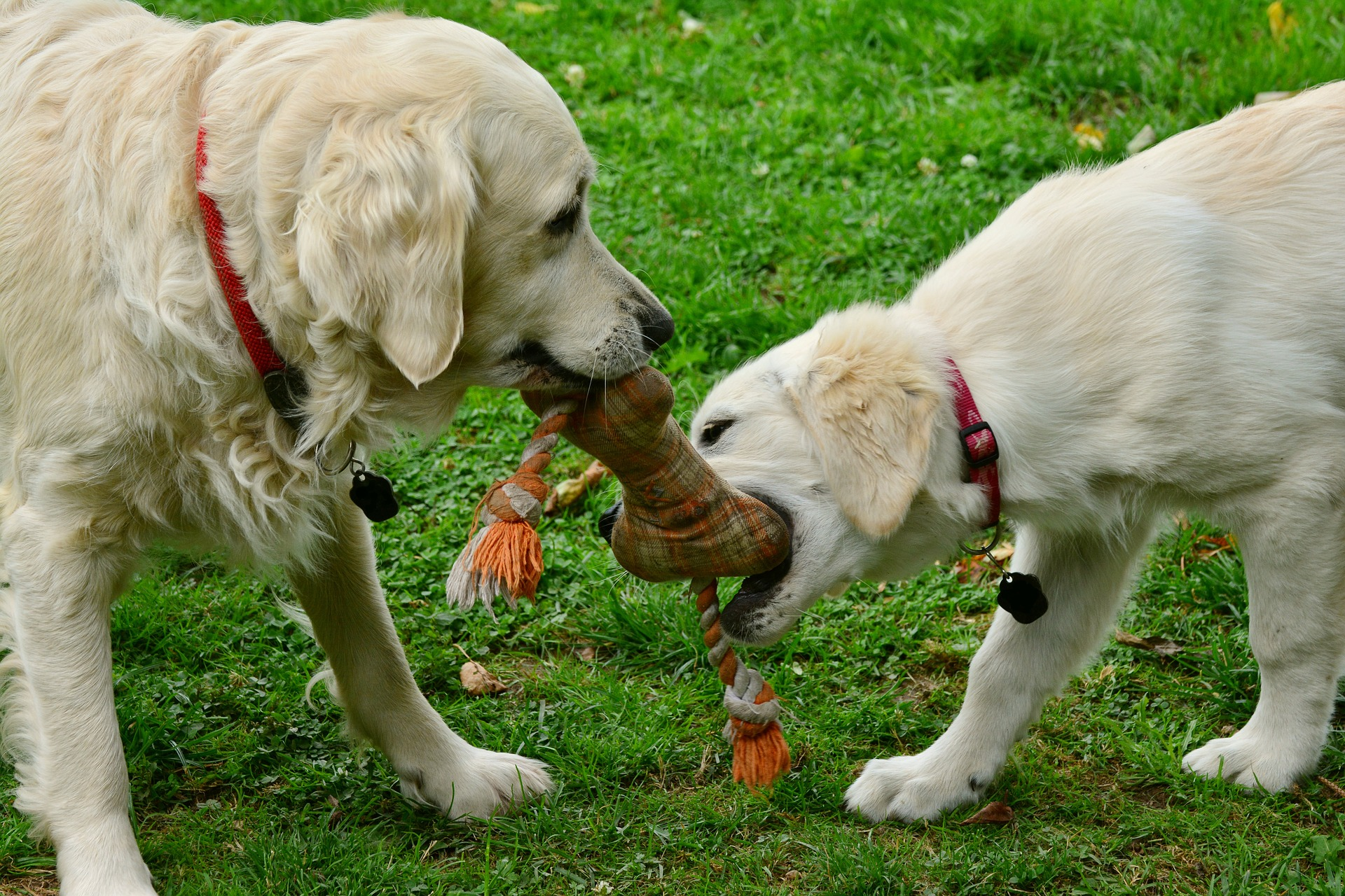Dogs and kennel cough