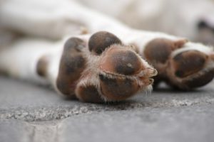 Dogs chewing paws
