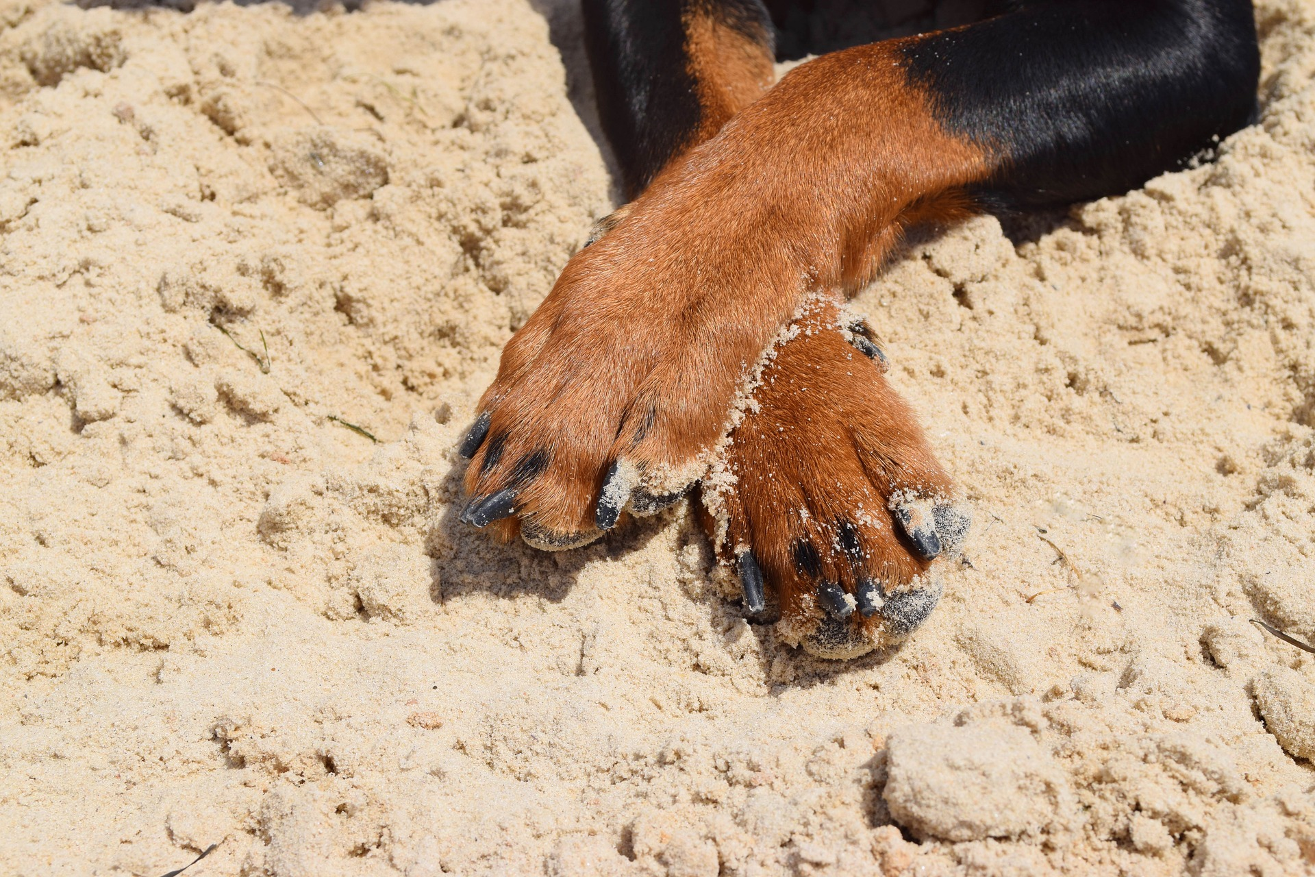 Why do dogs chew their paws
