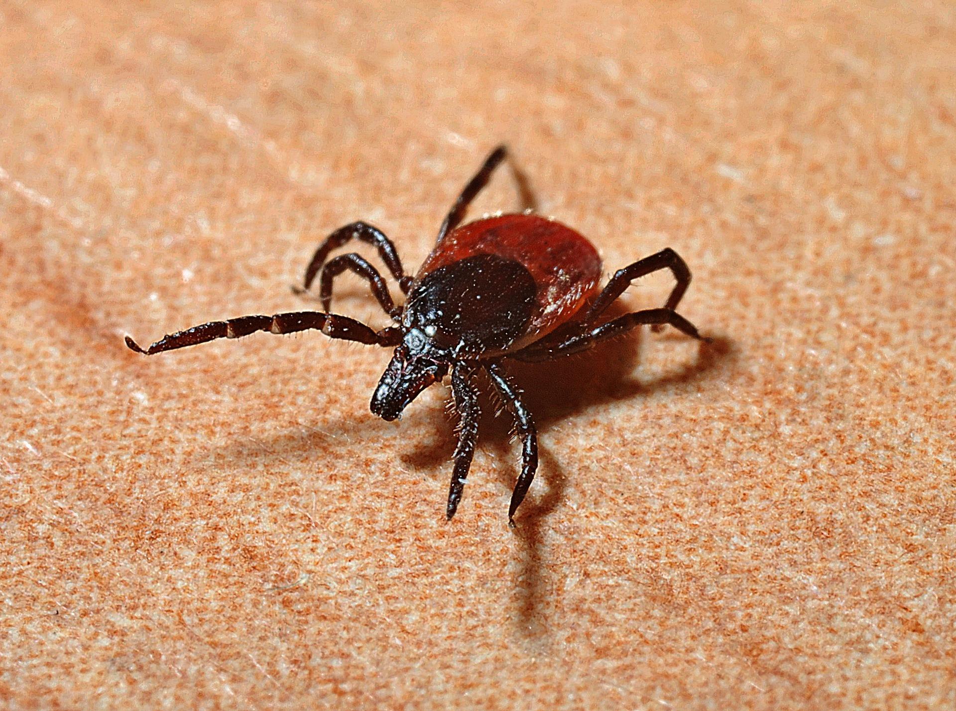Ticks protection