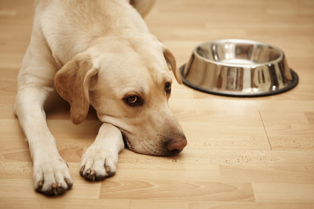 how to store dry dog food