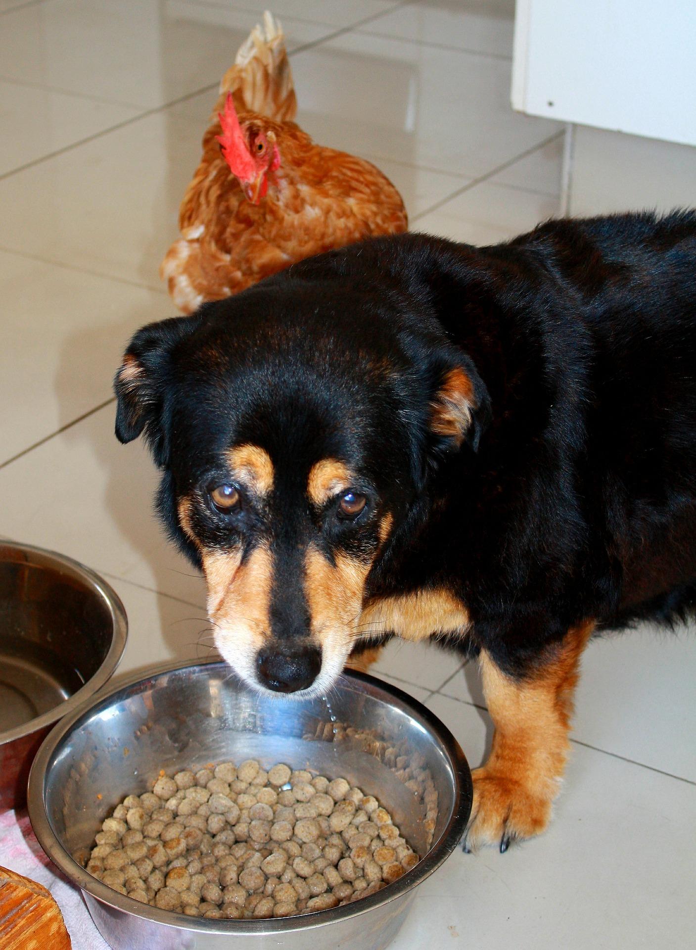 do dogs get acid reflux