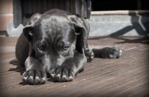 dog acid reflux
