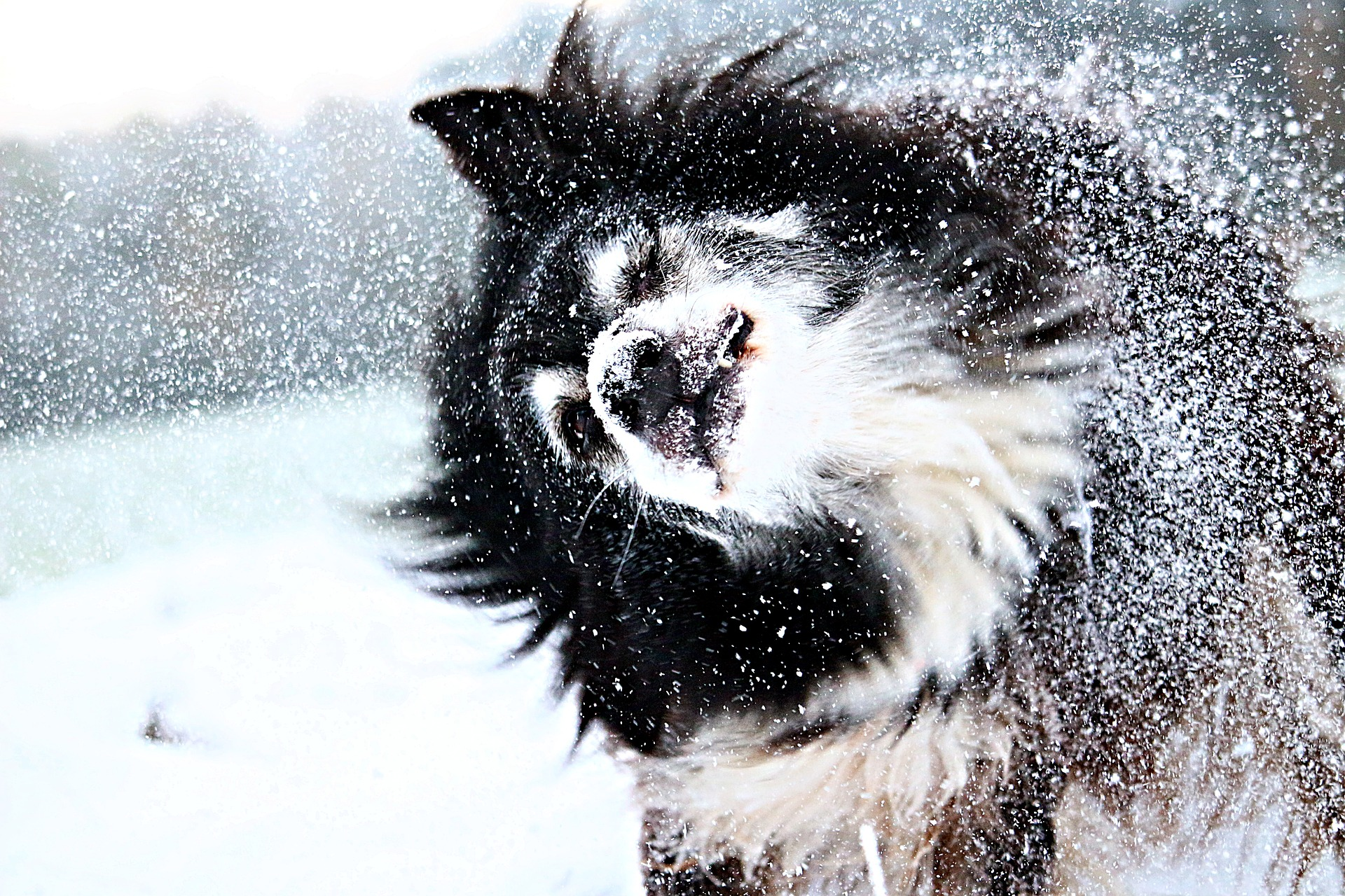 Dog snow boots reviews