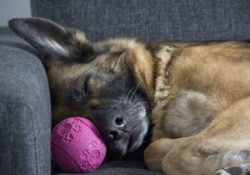 long do dogs sleep