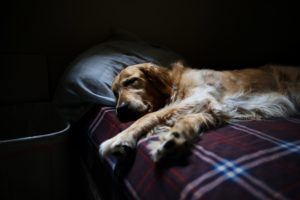 orthopedice dog bed review