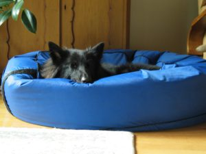 Orthopedic dog beds review
