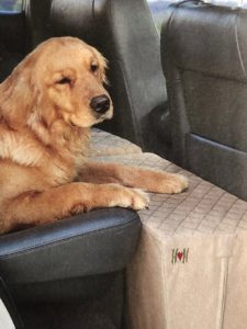 Seat extender for dogs