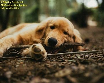 GPS Tracking Dog Tag