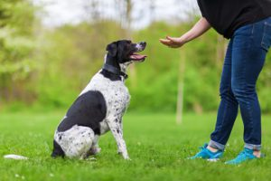 dog training hand signals