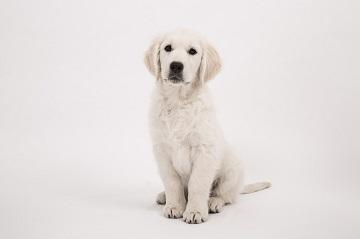 Dog Hand signal training