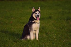 Best heartworm protection