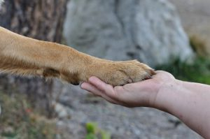 Stop dog pawing