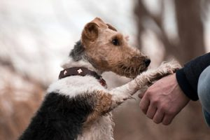 Why Does My Dog Paw Me-How To Stop Dog Pawing | Just For