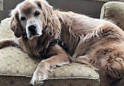 symptoms of dog vertigo