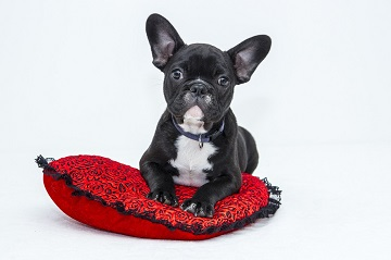 Valentine's Gifts for dogs