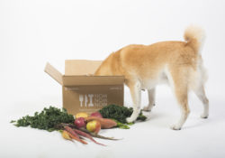 Best Fresh Dog Food Delivery
