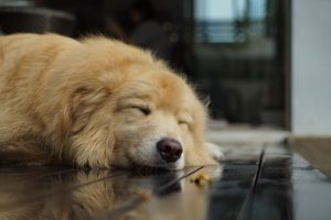 Keep a dog from slipping on hard floors