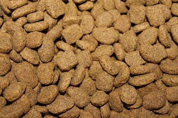 dry dog food vs fresh dog food