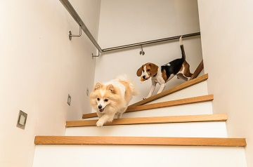 exercise your dog indoors