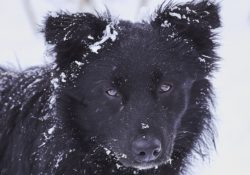 Preventing dogs from frostbite