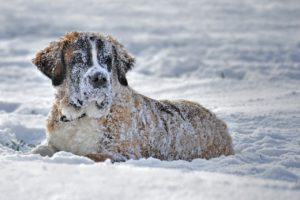Preventing dog frostbite