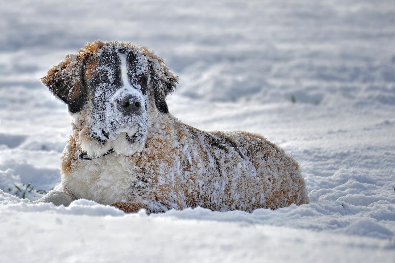 Preventing dog frostbite